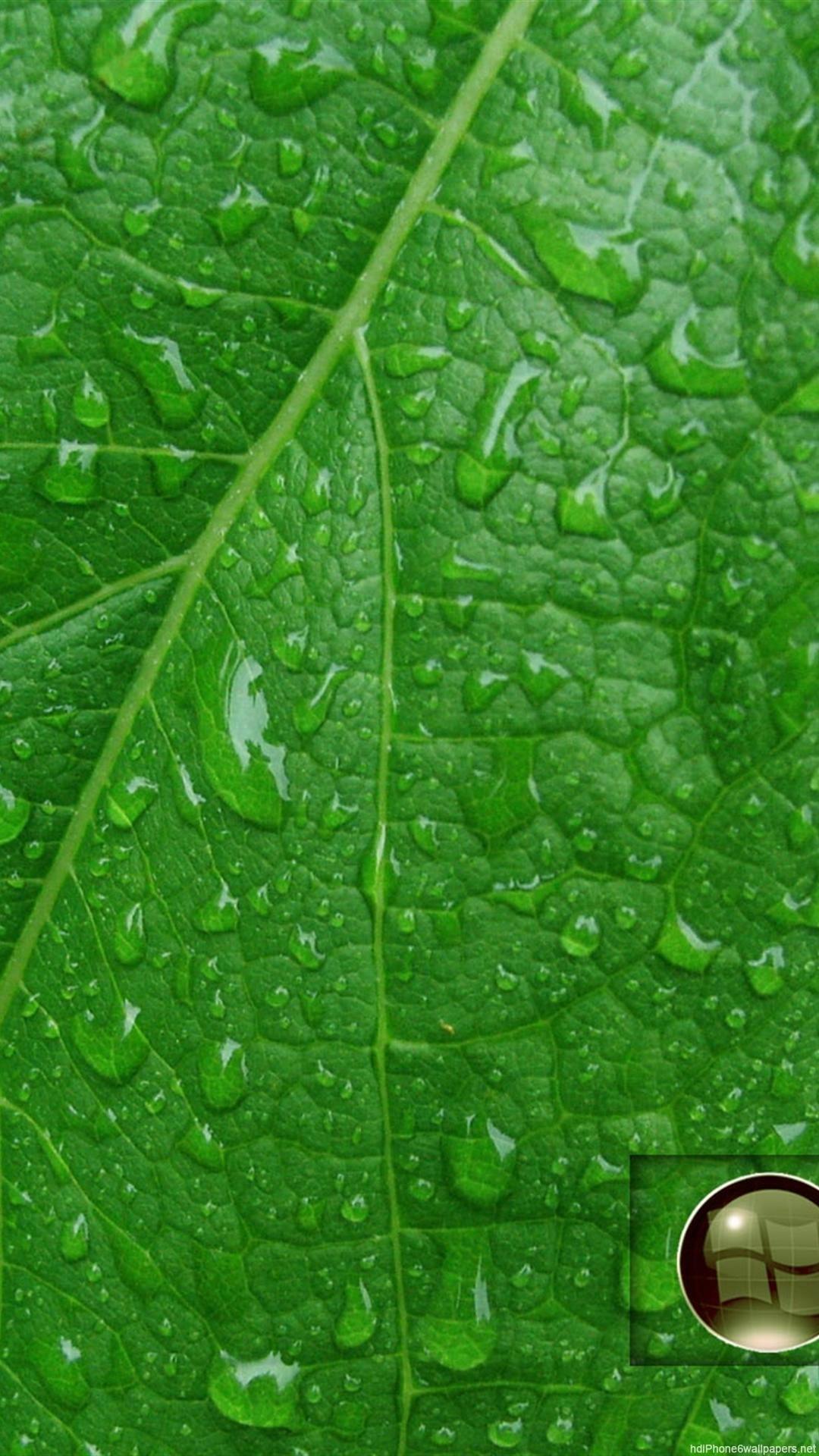 Rain Drop Wallpaper Hd Green Leaf Wallpaper Hd 70 Images