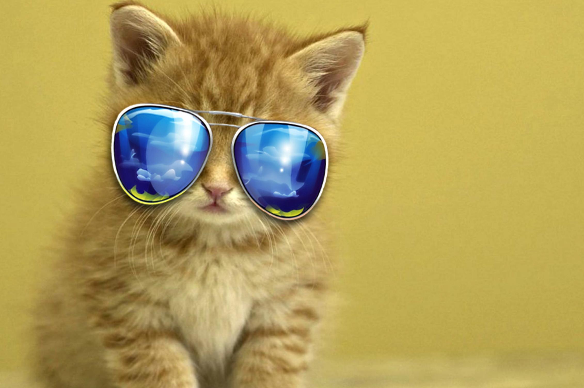 Cute Little Kitten Desktop Wallpapers Cute Animal Wallpaper For Computer 59 Images