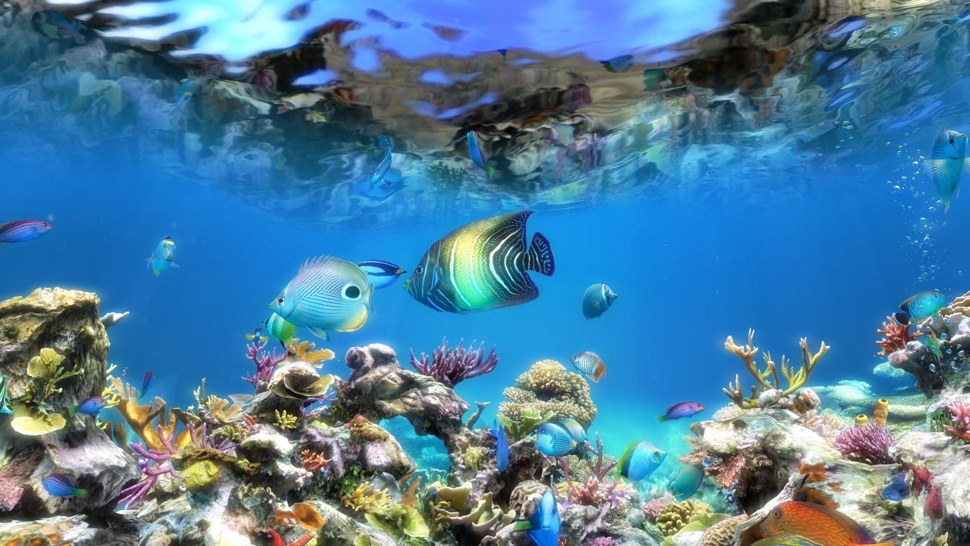 Hd Fish Live Wallpaper For Pc Moving Aquarium Wallpaper 49 Images