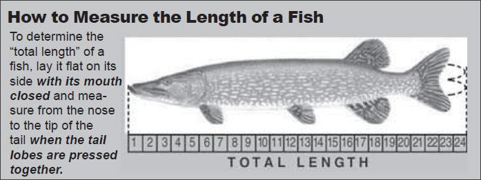 Fishing Regulations Guide North Dakota Game and Fish