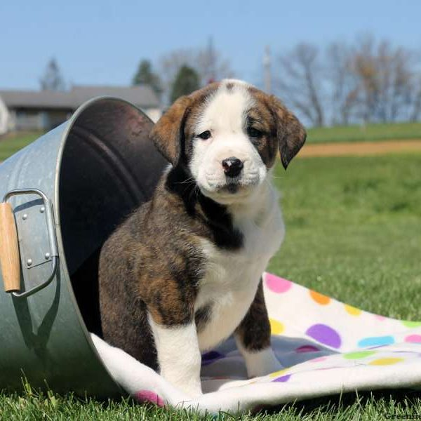 Image For View Explore All Dog Breeds Greenfield Puppies