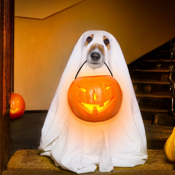6 Adorable Halloween Costumes for Dogs