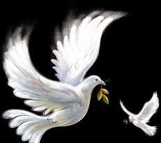 golubi na foni temnoi noci