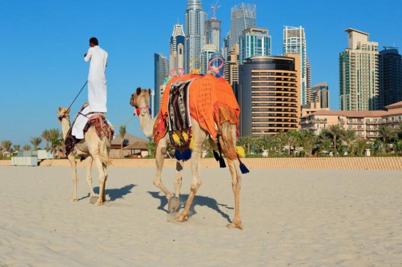 verblud v emiratah