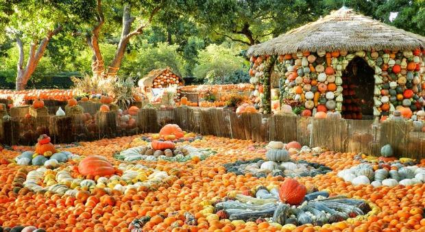 Wisteria Falls Wallpaper Dallas Arboretum Pumpkin Village Halloween Family Activities
