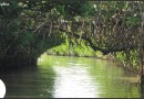 Discovering the Picturesque Pichavaram – Second largest mangrove forest in world  .