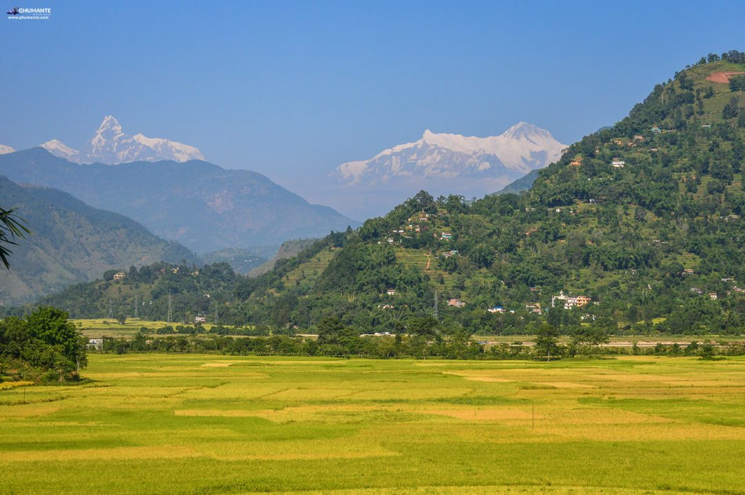 Paddy fields of Amale village, with Machhapuchre , Annapurna Range