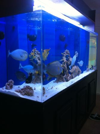 400 Gallon Fish Tank w/ Stand & Canopy ? $6000 (Redondo beach