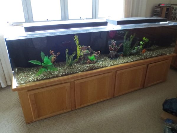 75 gallon aquarium craigslist craigslist on pinterest for 75 gallon fish tank dimensions