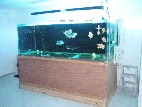 500 gallon glass fish tank ? $6000 (holiday,fl) | giant aquariums
