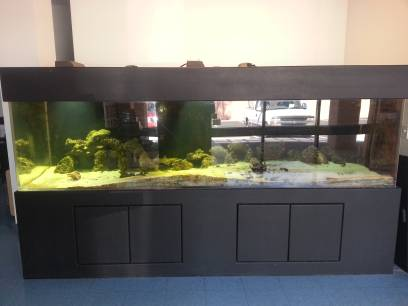 Huge salt water aquarium ? 10 Foot / 570 gallon ? $4400 (Tucson AZ