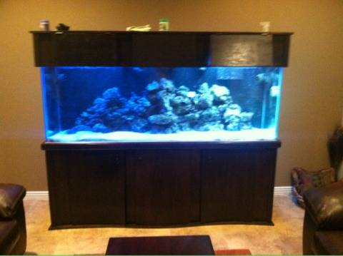 Saltwater Aquarium 300 gal ? $1200 (Indian School and 82nd st