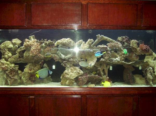 for sale 360 gallon acrylic aquarium with mahogany stand and canopy i