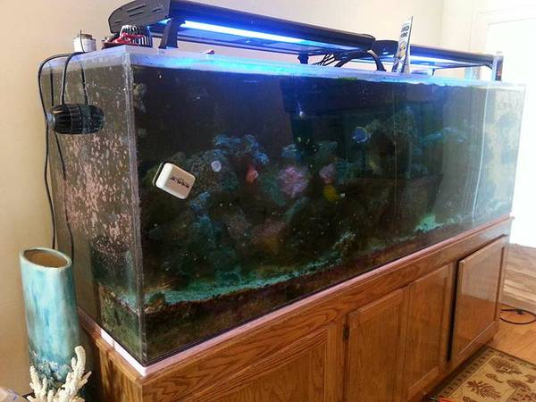 Im selling a 300 gallon salt water reef. Plus lights and controller