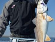 Ron's Louisiana redfish on Fly