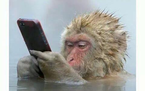 girls-in-bath-on-phone-monkey