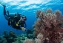 5 Fun Dive Package – 10% Discount