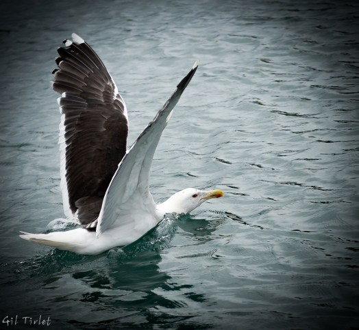 Gil Tirlet Photography - Fly In Brittany