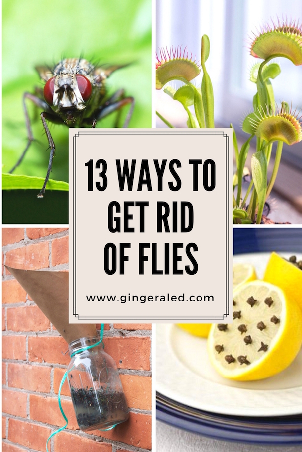 13 Ways To Get Rid Of Flies Gingeraled - Keep Flies Out Of House