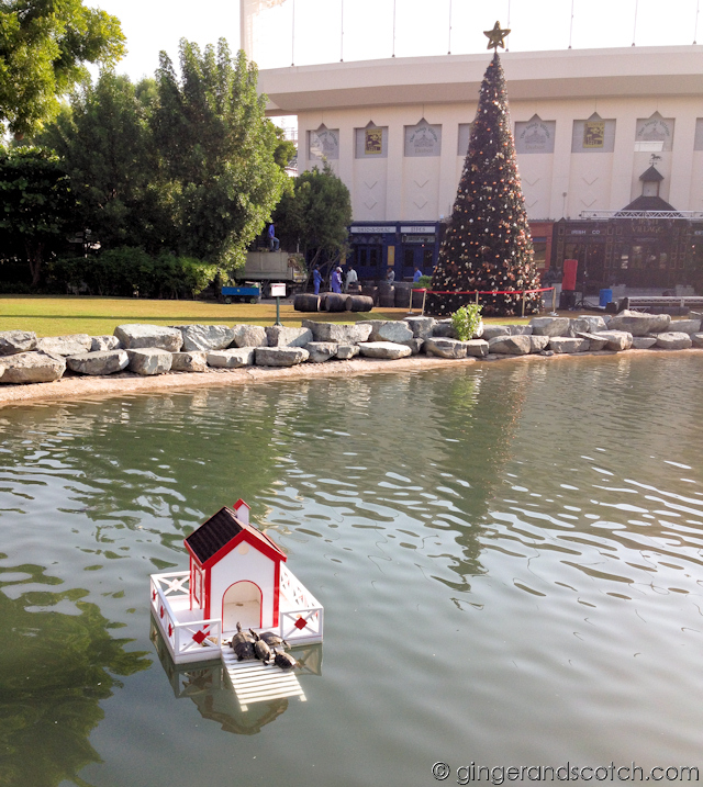 Duck Pond - Jumeirah Creekside Hotel