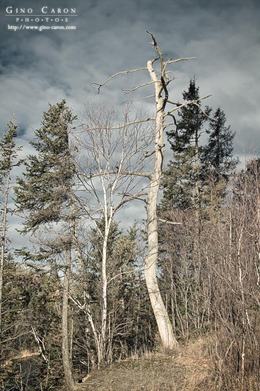 20100309203859_arbre.jpg