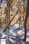 Sentier du littoral en hiver