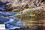 Sur le bord de la rivière