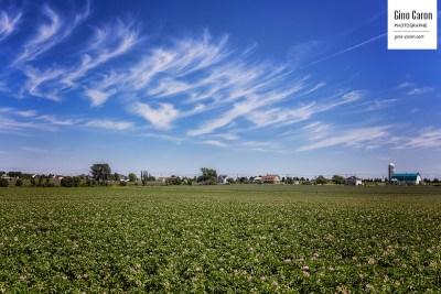 Un champ de pommes de terre, l'été dernier