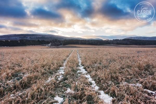 Matin de décembre... sans neige