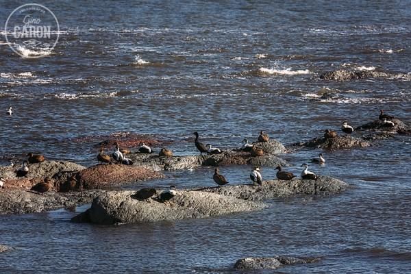 Oiseaux sur un rocher
