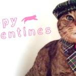 「ねこ好きな相手」にはやっぱり「猫スイーツ」に決まり!ネコ好きさん専用のバレンタイン&ホワイトデースイーツ5選+おまけ