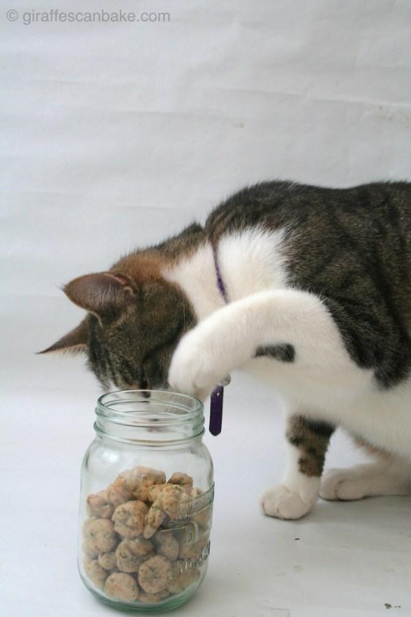 Tuna catnip kitty treats giraffes can bake for Is tuna fish good for cats
