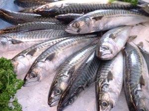 青魚の佃煮