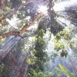 Sunlight through Trees in Thailand