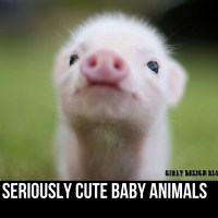Seriously Cute Baby Animals