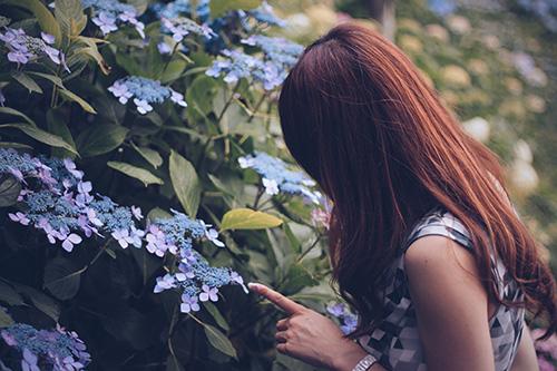 紫陽花(あじさい)に興味を持った女の子のフリー写真素材(商用可)