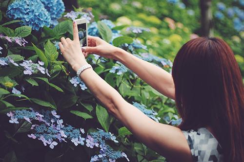 紫陽花(あじさい)の写真を撮る女の子のフリー写真素材(商用可)