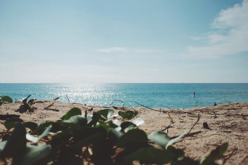 海外のキレイすぎる海と草のフリー写真素材(商用可)