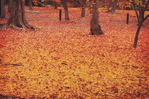 赤からオレンジに移りゆく落ち葉のグラデーションのフリー写真素材(商用可)