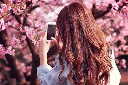 iPhoneで桜の写真を撮影する女の子のフリー写真素材(商用可)