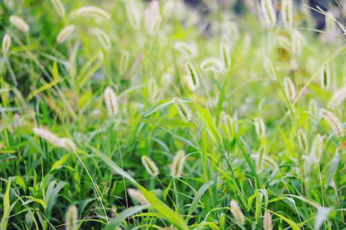 秋を感じるコスモスと青空のフリー写真素材(商用可)