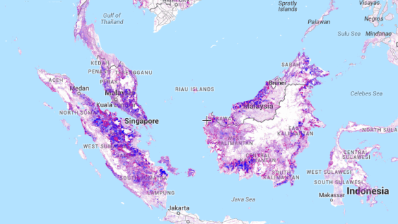 Global Forest Map