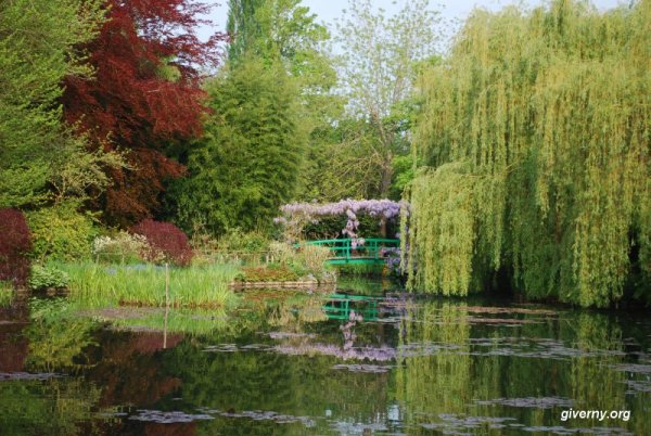 lily pond at Giverney