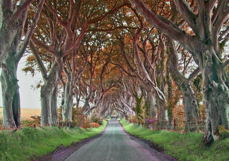 Ireland Fall Wallpaper Dark Hedges In Irlanda Un Viale Di Faggi Tra Fiaba E