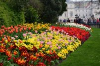 Bright Blooms in Hyde Park