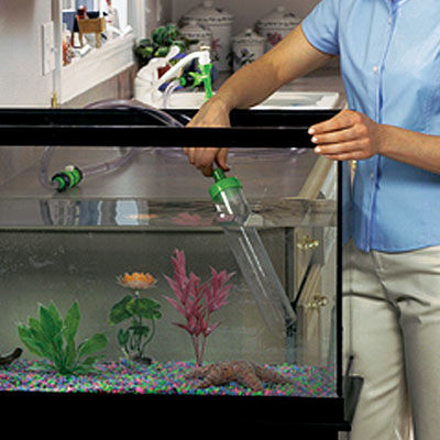 of your tank the most typical problem of an aquarium is dirty water