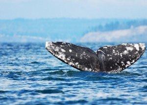 classpic.ru кит
