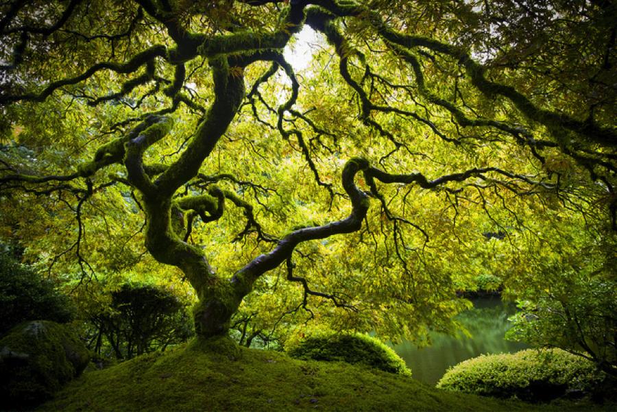 Fall Birch Tree Wallpaper Peter Lik Steven Gleich Digital Art Blog