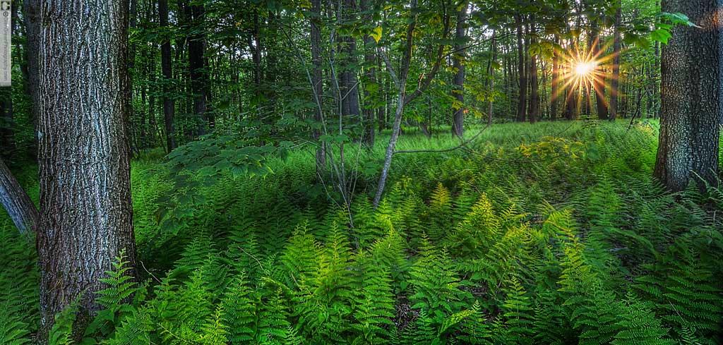 Fall Forest Wallpaper Pennsylvania Landscapes Glen Green Photography Glen