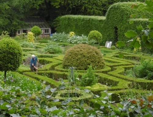 Beautiful Gardens in Cork that you can visit